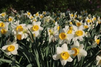 Spring in WI